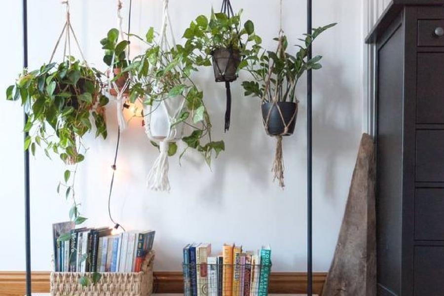 rens luften med planter